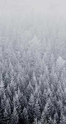 Fondo-Pantalla-iPhone-6-pinos-nevados-min