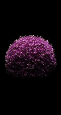 Fondo-Pantalla-iPhone-6-ramo-violeta-min
